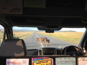 Insiders Guide to Baz Bus | Inside a baz bus while backpacking in south africa
