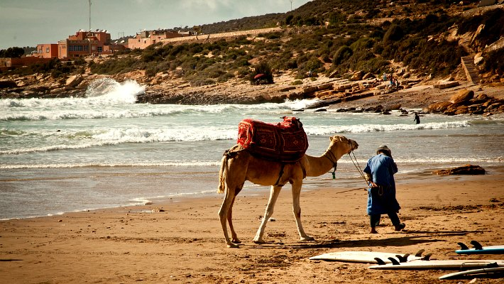 Backpackers in Africa | Camels in Africa | Northern Africa
