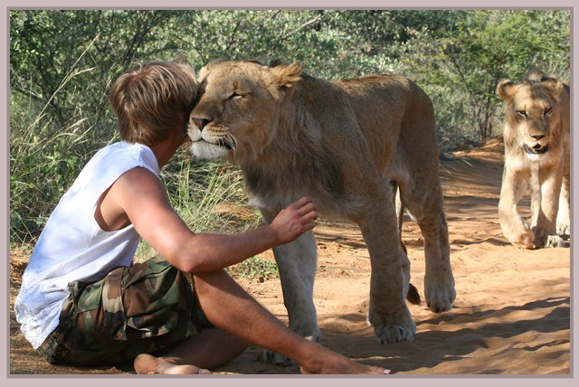 Backpackers in Africa | Playing with Lions in Africa