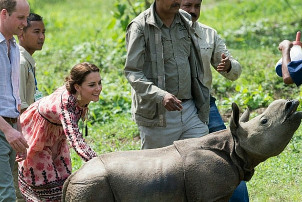celebs in africa, prince william in africa, kate middleton in africa, baby rhino