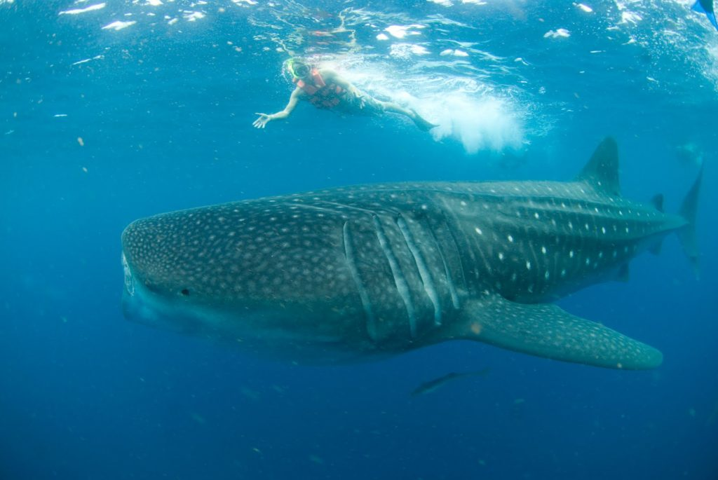 If you get the chance-- go diving in Tofo, Mozambique. If you time it right, you can be there during whale shark season. Photo Credit: Beyond Adventure Blogspot
