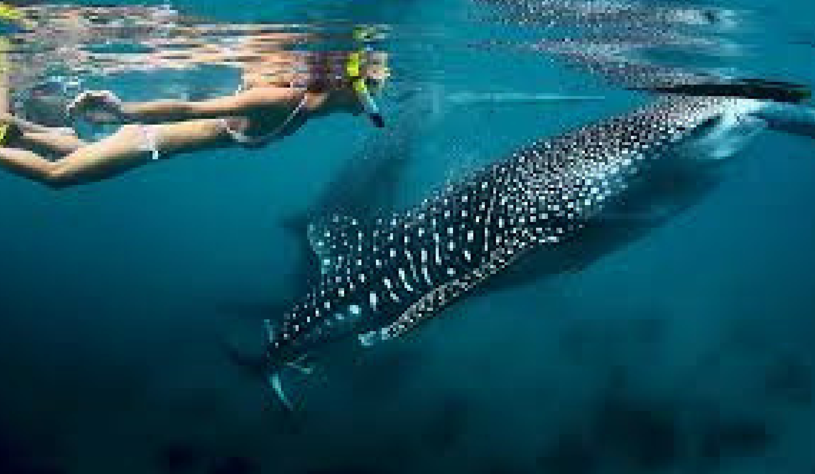 backpacking africa story, whale sharks, backpacking south africa
