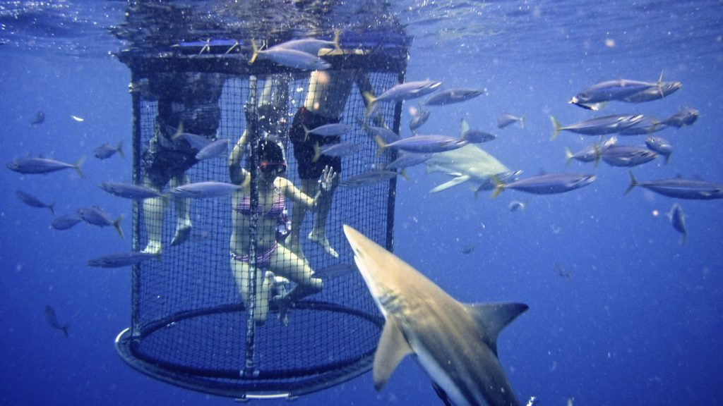 shark diving, backpacking south africa, bucket list ideas